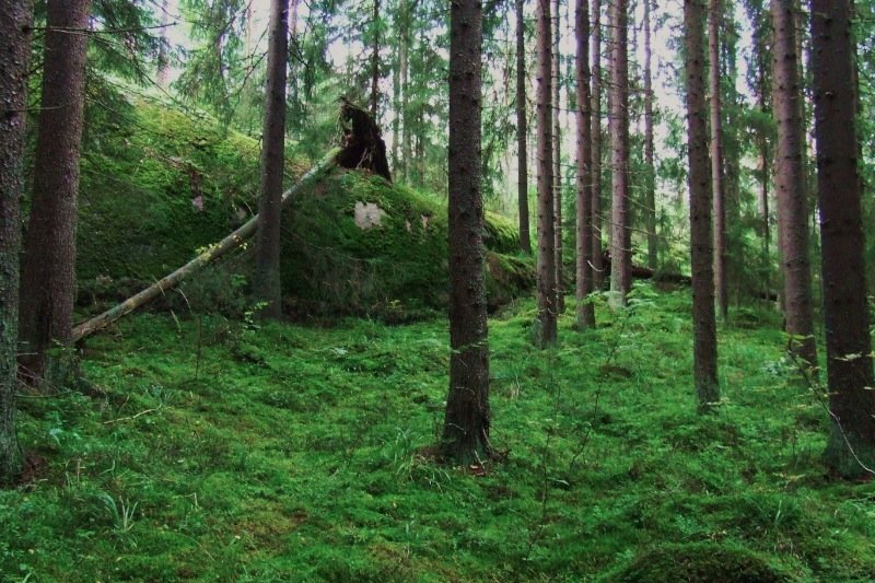 Finnish woods