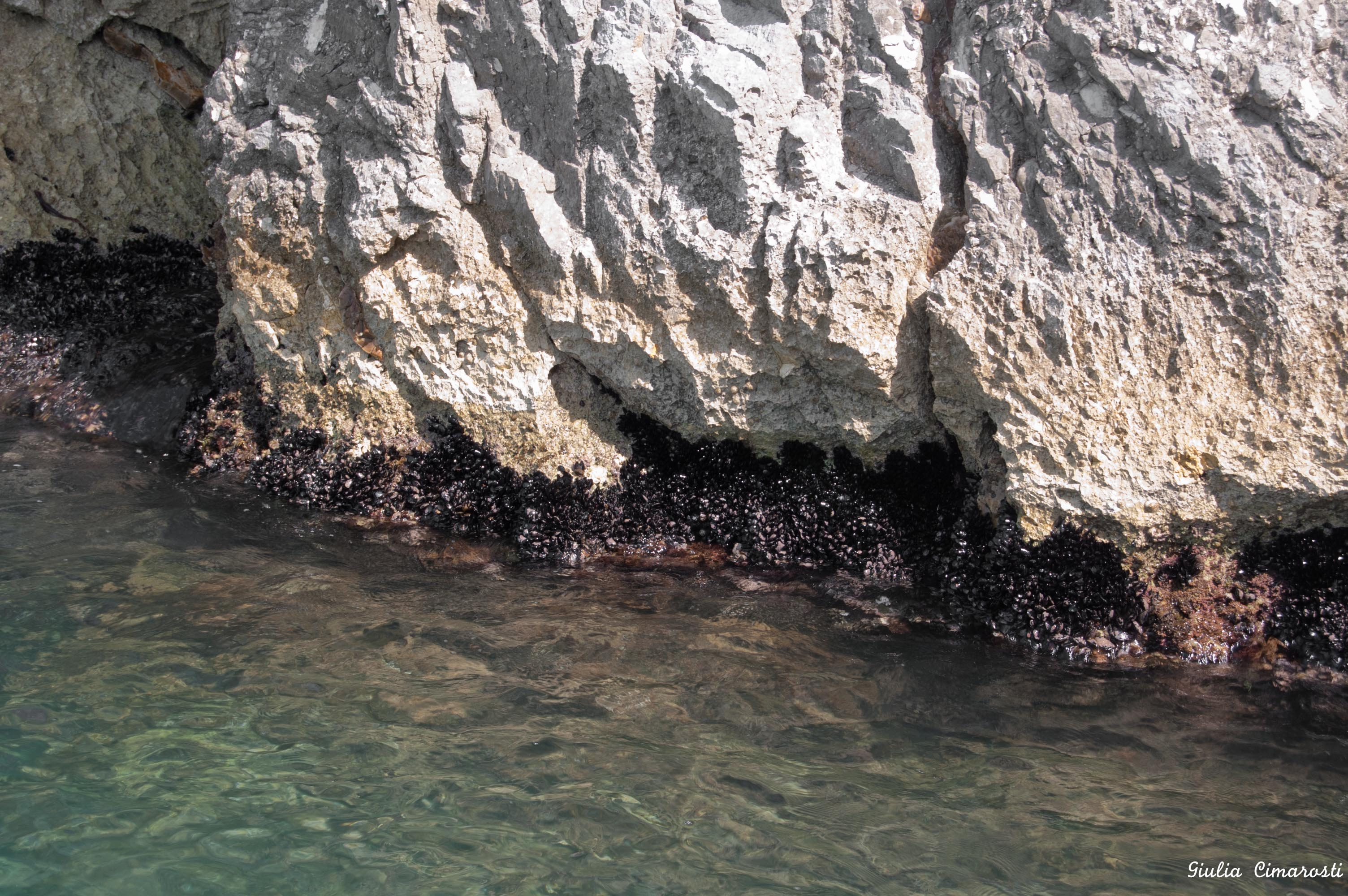 Mussels, Apulia, Italy. Yummy