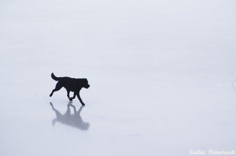 Fjallsárlón... Kavo walking on ice