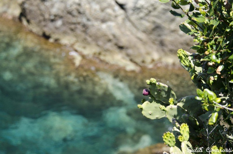 The colors of the Mediterranean