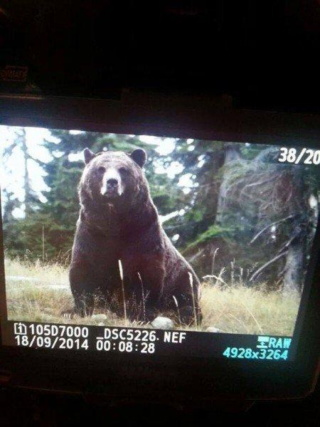 I saw a bear!!!