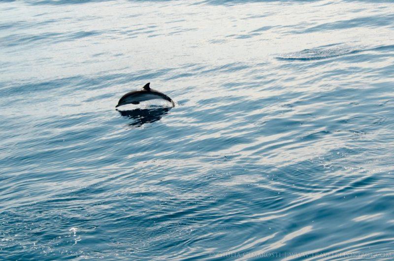 Whale-Watching-Genova-Italy5