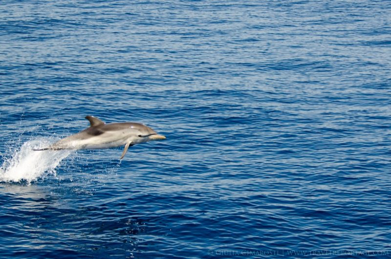 Whale-Watching-Genova-Italy8