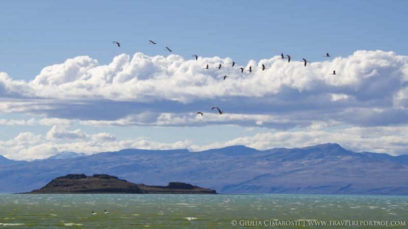 El Calafate: flamingos and mountains