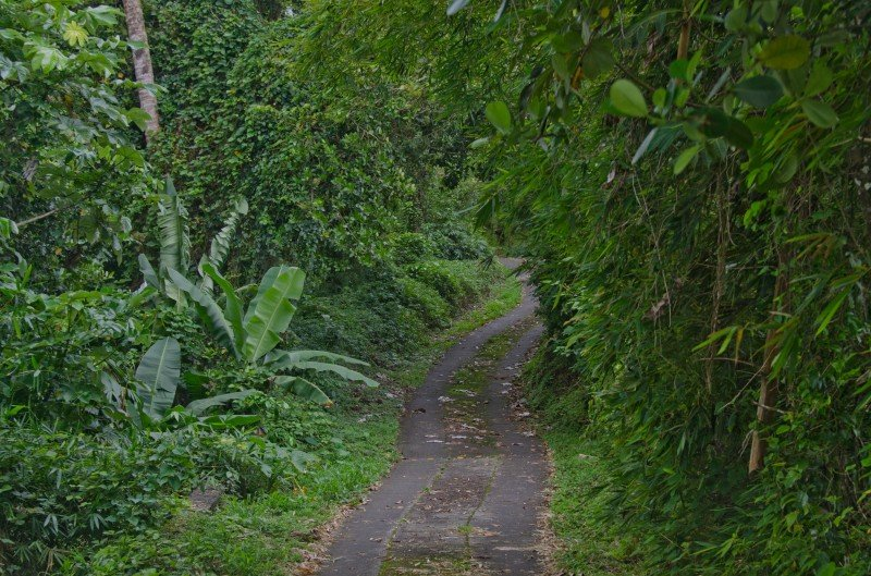 The road to the start of the hikes on Volcano la Soufrière