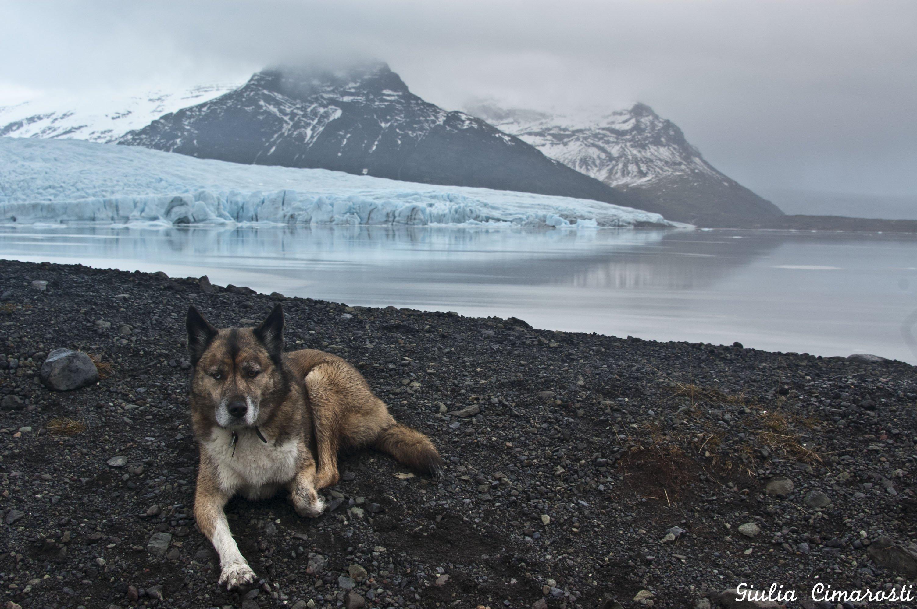 Balto the dog posing in Fjallsárlón