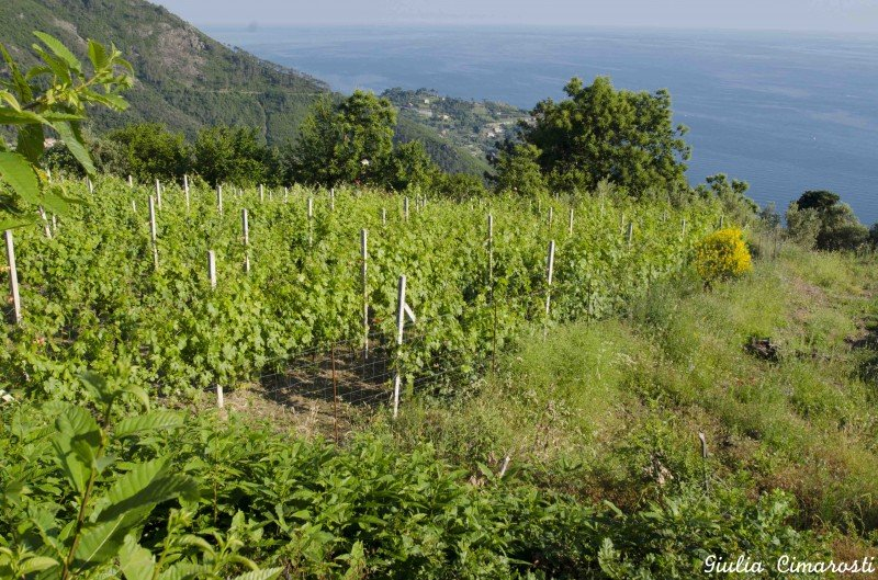 Cà du Ferrà: (bio) vineyards with a view!