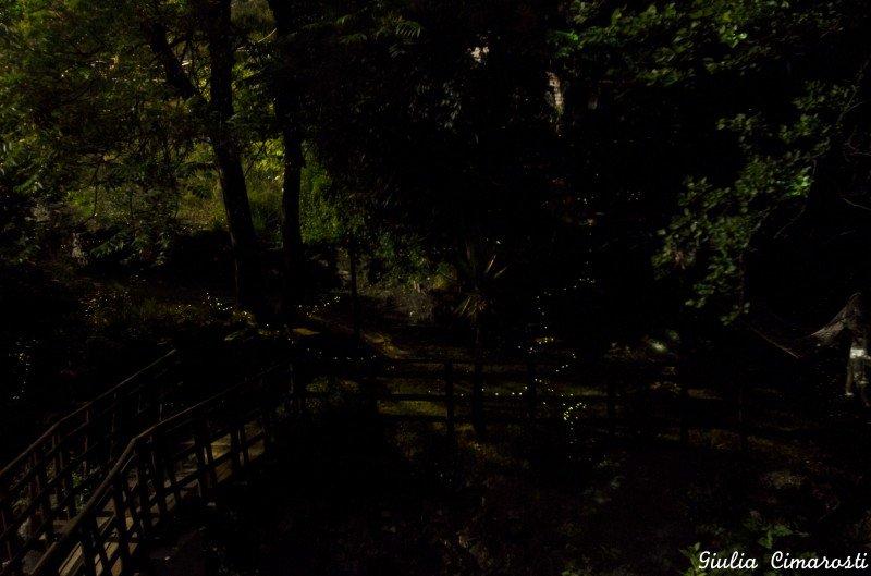 Fireflies as seen from my window