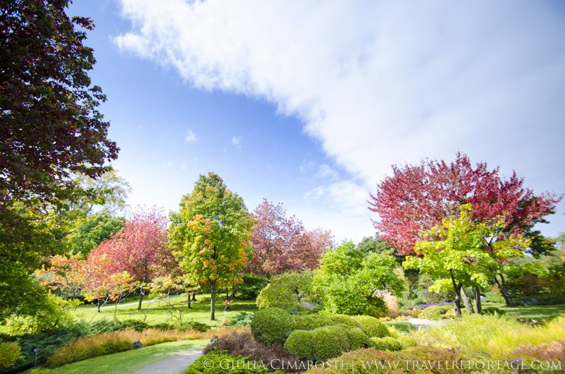 Relax in the Japanese Garden - Montreal Botanical Garden