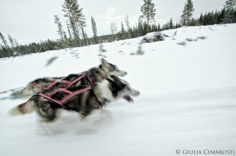 The sleddog ride