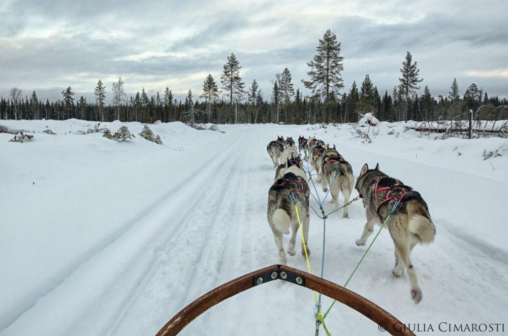 The sleddog ride