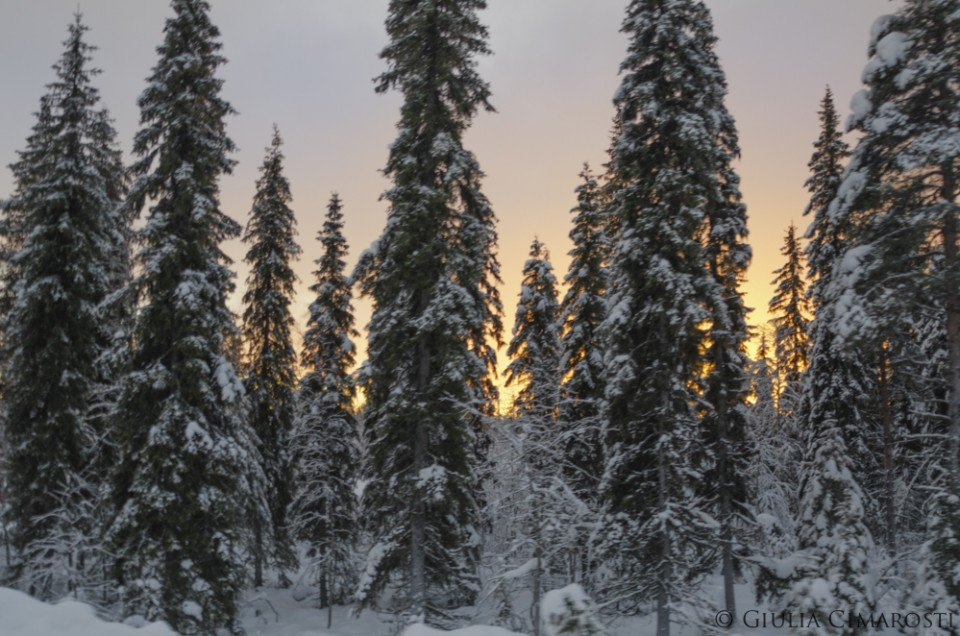 What to do in the Swedish Lapland in the winter