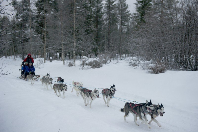 Sleddog ride in the Swedish wilderness