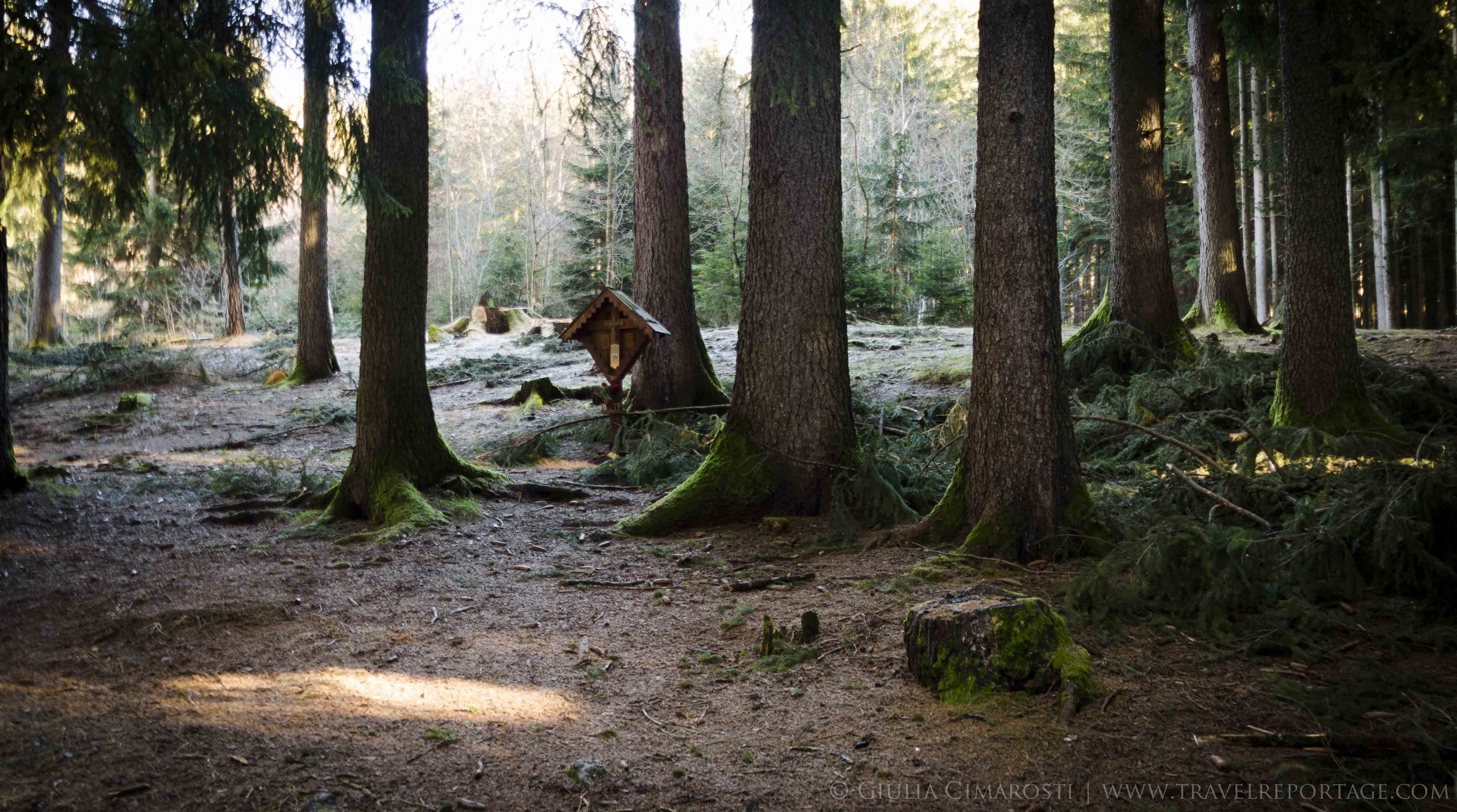 The magical light in the woods - Fie - Dolomites Italy