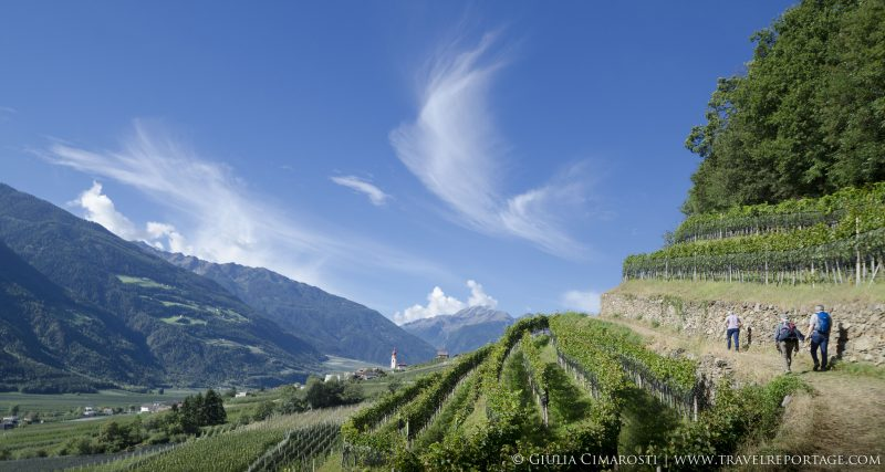 Hiking by the vineyards in Vinschgau
