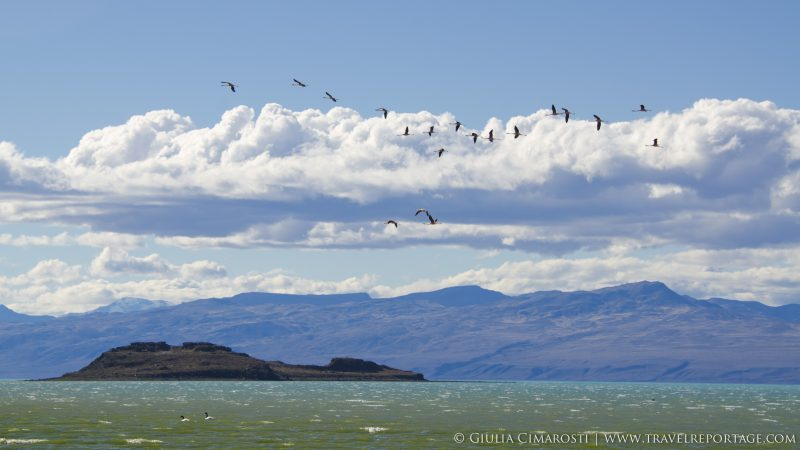 El Calafate: flamingos and mountains
