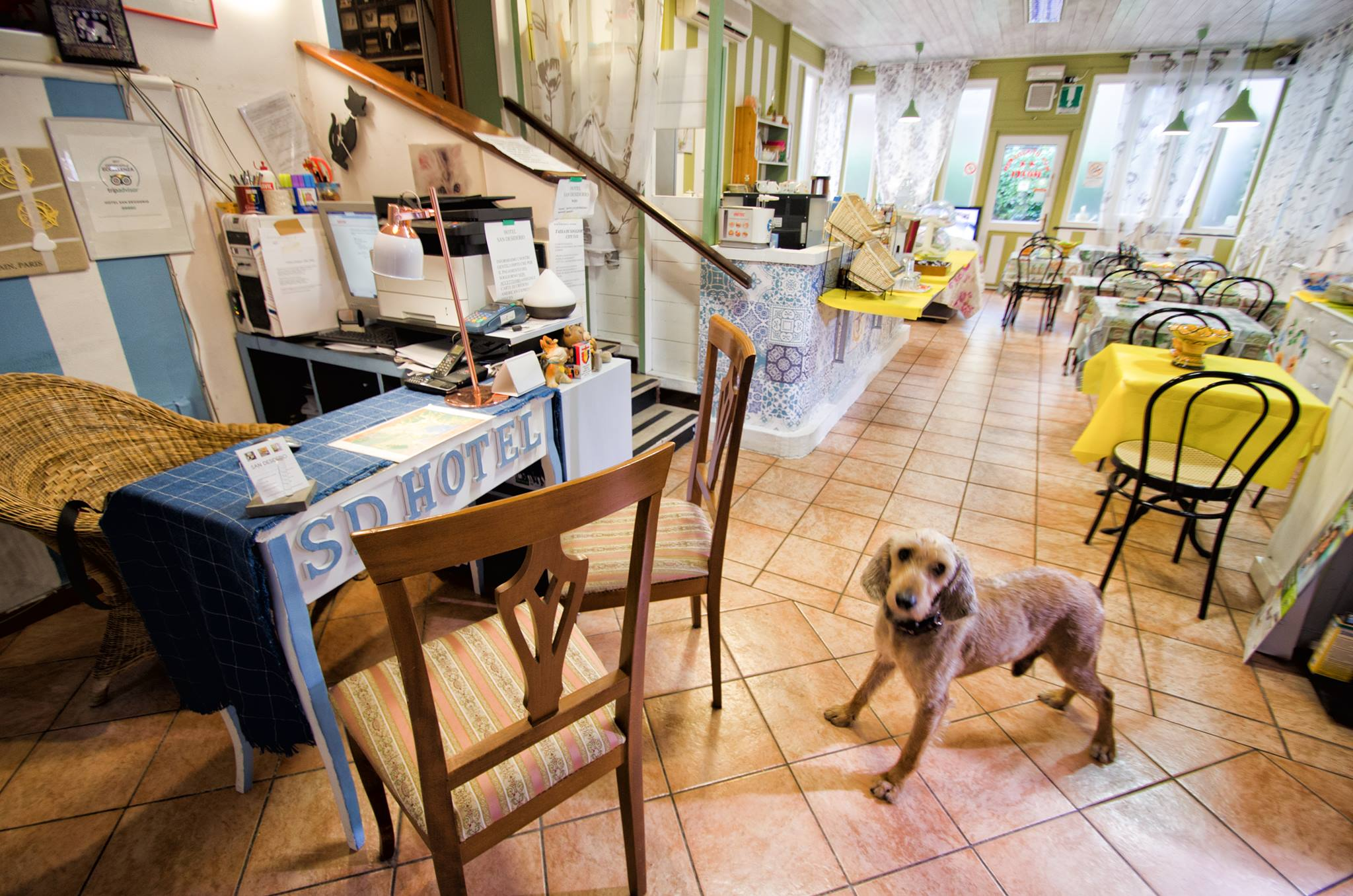 Idefix the dog - Hotel San Desiderio Rapallo - Cheap accommodation